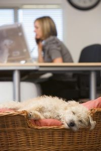 More Offices Adopt Pet-Friendly Policies
